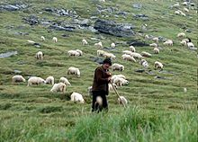 romania_shepherd